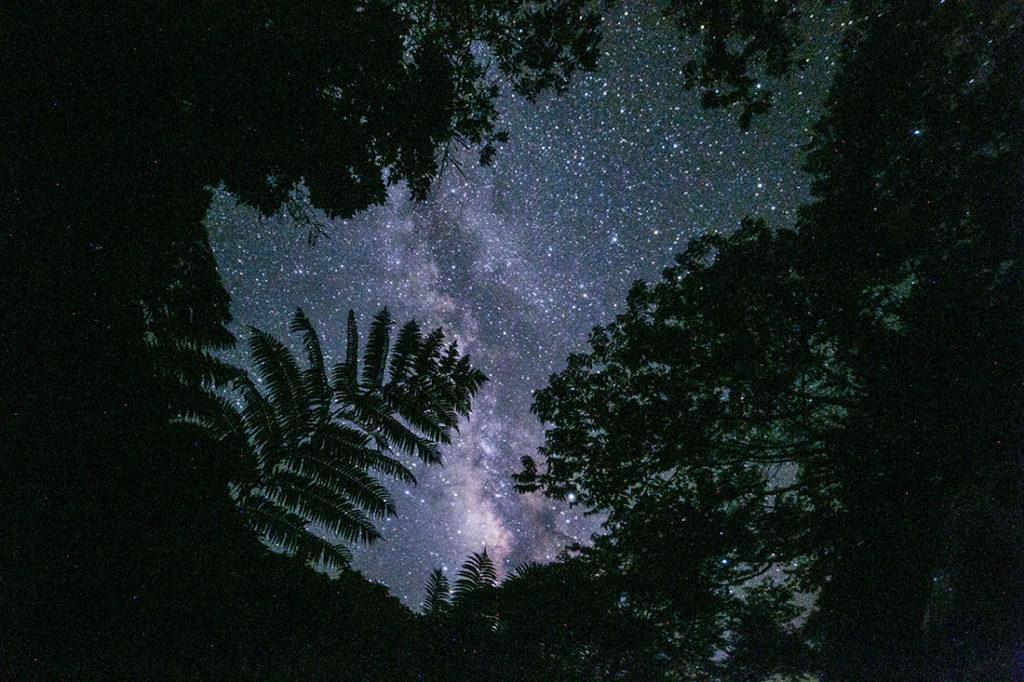 石垣島の星空ツアー森の中の天の川